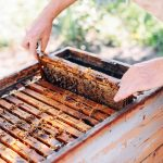 Starting Your Own Bee Farm