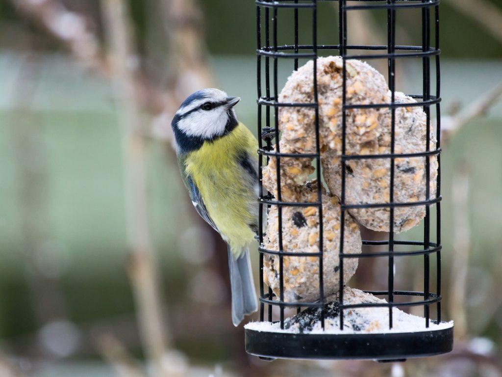 peanut butter bird food