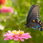 Perennial Plants for Bees and Butterflies