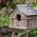 Types of Birdhouses for Different Birds