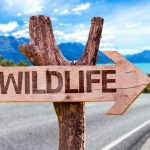 What is a National Wildlife Refuge